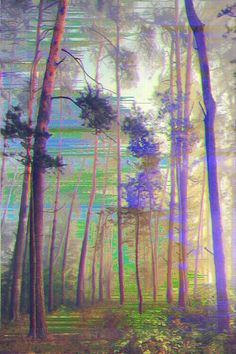 Trippy forest picture found on Twitter