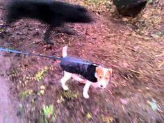 Dog Walkers Wandsworth (www.harrisons-dogs.co.uk)