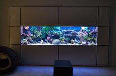 This custom LED has the spectrum to grow massive corals! Read more about this modification! Aquarium Stand, Home Aquarium, Marine Aquarium, Reef Aquarium, Saltwater Aquarium Fish, Saltwater Tank, Aquarium Design, Fish Tank Wall, Fish Tanks