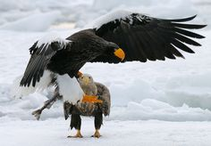 Focused by Harry  Eggens on 500px