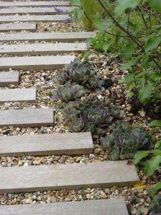 Red Cedar path through Notting Hill garden Landscape Design, Garden Design, Evergreen Climbers, Cedar Cladding, Weight Watchers Smart Points, Garden On A Hill, Limestone Flooring, Specimen Trees, Garden Paving