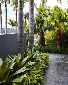 #outdoorestablishments - This Mosman garden of ours would be the perfect spot to kick back and relax in this warm weather. Giant bromeliads, Philodendron xanadu and Cabbage Palms frame the granite cobbled pathway to the swimming pool. Very lush! Photography by @nataliehunfalvay