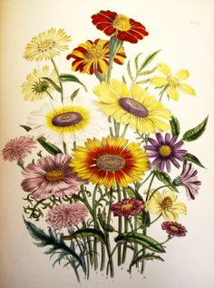 The ladies' flower-garden of ornamental annuals / Jane Loudon @ http://capitadiscovery.co.uk/cityoflondon/items/149840 #horticulture #flowers #rarebooks