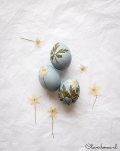 These natural dye Easter eggs are fun to make. Use fruits and vegetables to dye the eggs and pressed flowers and leaves to decorate them - Cloverhome.nl Spring Flowers, White Flowers, Pressed Leaves, Easter Egg Dye, Blue Eggs, Egg Decorating, Growing Flowers, Pansies, Fun Projects