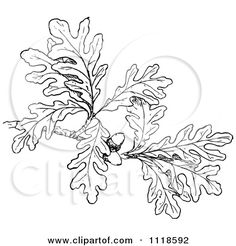 oak leaf tattoo - Google Search