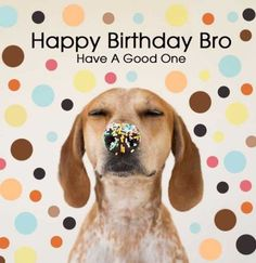 Here you will find an amazing collection of happy birthday wishes for brother.