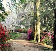 Edisto Memorail Gardens, River Walk in the spring, Orangeburg, SC
