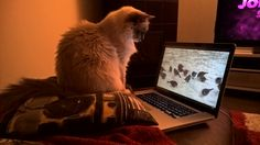 She likes to watch bird videos from YouTube :)