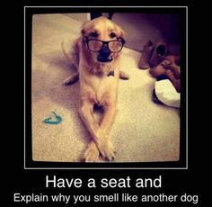 Funny Dogs with Captions | Funny dog photo with captions explain why you smell like another dog