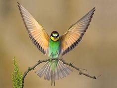 kanatları ile kuş vektör