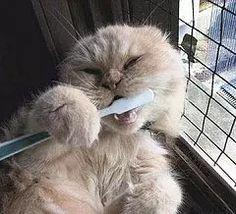 Mi mamá no me deja ir a dormir sin lavarme los dientes