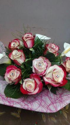 Rosa olandese