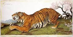 """Walton Ford tiger painting """"Hyrcania"""", Watercolour, gouache, pencil, and ink on paper. Walton Ford, Extinct Tigers, Nature Artists, Fauna, Magazine Art, Animal Paintings, Natural History, Big Cats, Cat Art"""