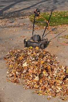 For great compost: Rake your leaves onto your driveway before you crunch them up with your lawnmower.  When you chop up the leaves on the lawn, you lose many of the tiny pieces of chopped leaves, which are the best. On the driveway, it's very easy to sweep up those tiny bits. Compost Soil, Garden Compost, Garden Soil, Garden Care, Composting, Gardening Magazines, Gardening Tips, Fall Lawn Care, Landscaping Tools