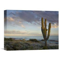 Saguaro Cactus At Beach, Cabo San Lucas, Mexico By Tim Fitzharris, 12 X 16-Inch Wall Art