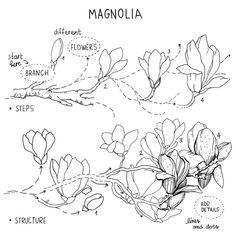 Flower Art Drawing, Flower Line Drawings, Flower Drawing Tutorials, Botanical Line Drawing, Flower Sketches, Floral Drawing, Art Drawings Sketches, Botanical Art, Eye Drawings
