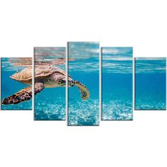 Design Art Hawksbill Sea Turtle Abstract Canvas Art Print ($215) ❤ liked on Polyvore featuring home, home decor, wall art, canvas wall art, turtle wall art, canvas panels, abstract home decor and abstract canvas wall art