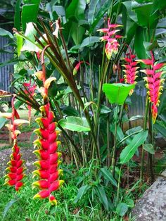 39 Tropical Plantation Ideas You Can Try in Your Garden, – garden design Tropical Flowers, Exotic Flowers, Tropical Plants, Beautiful Flowers, Tropical Gardens, Tropical Backyard, Tropical Landscaping, Backyard Patio, Landscaping Ideas