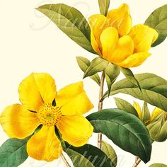 lovely yellow flower illustration!