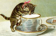 victorian+cat+tea+cup   ... : Free Victorian Image: Little Kitten Drinking Milk from Tea Cup