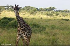 Photo taken by Barron King on Intrepid's Serengeti & Kilimanjaro Trip