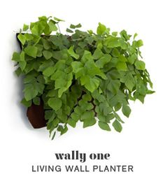 Woolly Pocket   Living Walls, Vertical Gardens, Indoor Wall Garden Planters for Urban Gardening