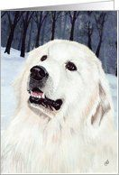 Great Pyrenees Mountain Dog Breed Painting Happy Birthday Card by Greeting Card Universe. $3.00. 5 x 7 inch premium quality folded paper greeting card. Birthday cards & photo Birthday cards from Greeting Card Universe will bring a smile to your loved ones' face. Show your loved ones you care with a custom paper card to celebrate their birthday. Let Greeting Card Universe help you find the best birthday card this year. This paper card includes the following themes: Great Pyren...