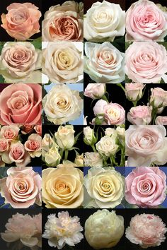 "Have you ever found a picture of a bouquet and wondered, ""What is that flower?"" Here is a collection of flower names sorted by color. A few bouquet examples are at the bottom and so… Types Of Flowers, Cut Flowers, Pink Flowers, Pastel Roses, Blush Roses, Tea Roses, Exotic Flowers, Flowers Garden, Yellow Roses"