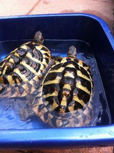 bath time turtles