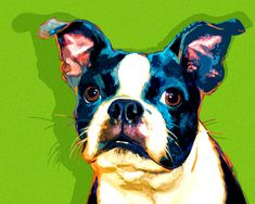This Boston Terrier work of art has been completed. Description from artpaw.com. I searched for this on bing.com/images