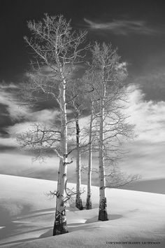 winter / black and white photography / the trees stand alone. Winter Szenen, Winter Magic, Winter Time, All Nature, Flowers Nature, Snow Scenes, Winter Beauty, Winter Landscape, Belle Photo