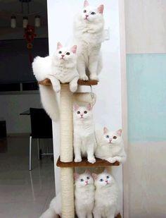 poleiro de gatos