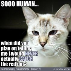 PLEAD THE 5TH, PLEAD THE 5TH!!!! #cats #funny ADOPTED!!!