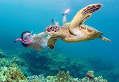 Hanauma Bay Snorkeling Tours to Hawaii's Best Reef on Oahu Akumal Mexico, North Shore Beaches, Hanauma Bay, River Painting, Best Snorkeling, Round Trip, Belize, Turtle, Tours