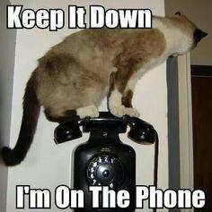 cute captions 7 Daily Awww: Funny captions make cute photos better photos) Funny Animal Memes, Animal Quotes, Funny Animal Pictures, Cute Funny Animals, Cat Memes, Funny Cute, Cute Cats, Animal Funnies, Animal Pics