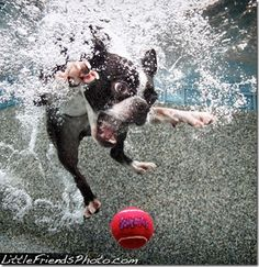 Dog Jumping into Swimming Pool | funny interesting cute underwater swimming dogs pictures (21)