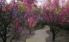 Shinzen Friendship Garden. Visit http://najga.org/gardens for map location.