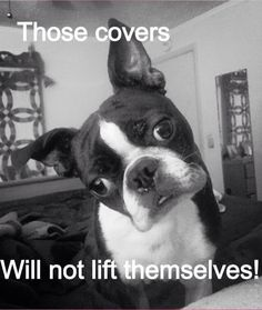 A few more minutes! #dogs #pets #BostonTerriers Please like, repin or follow us on Pinterest to have more interesting things. Thanks. http://hoianfoodtour.com/