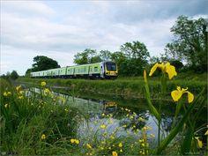 Summer Evening, Shades Of Yellow, Ireland Travel, Yellow Flowers, Dublin, Trains, Irish, Blue, Irish Language