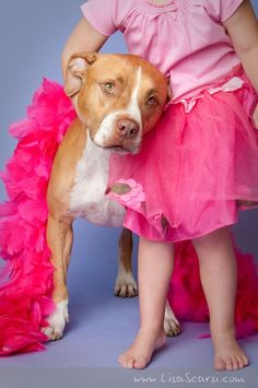 Pit Bull and little girl| Pit Bull Photography | Pit Bull Love