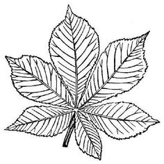 Thousands of printable coloring pages, worksheets, and mini books. Customize and create your own original pages for free. Leaf Coloring Page, Fall Coloring Pages, Printable Coloring Pages, Leaf Drawing, China Painting, Motif Floral, Kids Prints, Flower Art, Color Change