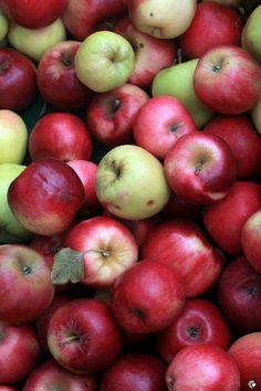 Harvest, Fruit, Food, Apples, Tile, Wallpapers, Autumn, Mosaics, Wallpaper