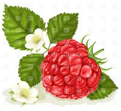 raspberry art - Google Search