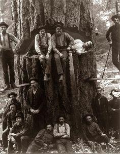 Lumberjacks 1901.