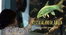 Así de atrevidos somos. Nos levantamos temprano, desayunamos bien, paseamos al perro y nos pusimos rumbo al zoo de Zürich con el bebé y la peque. Por si no fuera suficiente encerrarnos en un coche con los peques una hora larga, añadimos visitar el zoo en un domingo soleado, o séase, a tope de visitantes. … Anaconda, Fish, Animals, Interactive Activities, Elephants, Voyage, Domingo, Animales, Animaux