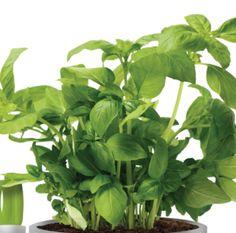 indoor-brussels-herbs-allin1