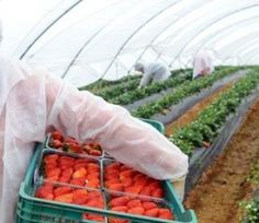 Românii au liber din 2013 în UE, pe piața muncii | Real Press Watermelon, Carrots, Fruit, Vegetables, Food, Essen, Carrot, Vegetable Recipes, Meals