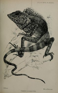 1872 - Proceedings of the Zoological Society of London. - Biodiversity Heritage Library