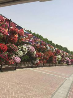 Dubai they call this place Miracle Garden