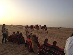 Βόλτα με τις καμήλες! #dubai #safari